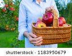 freshly picked ripe apples in a ... | Shutterstock . vector #1183950679