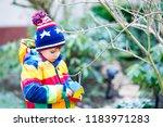 Little Kid Boy Hanging Bird...