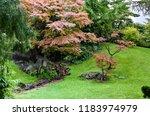 japanese garden fragment | Shutterstock . vector #1183974979