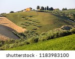 panoramic view of olive groves  ... | Shutterstock . vector #1183983100