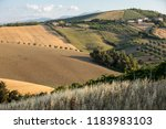 panoramic view of olive groves  ... | Shutterstock . vector #1183983103