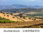 panoramic view of olive groves... | Shutterstock . vector #1183986553