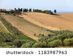 panoramic view of olive groves... | Shutterstock . vector #1183987963