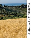 panoramic view of olive groves... | Shutterstock . vector #1183987966