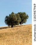view of olive groves and... | Shutterstock . vector #1183987969