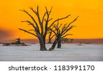 dead camelthorn trees and red... | Shutterstock . vector #1183991170