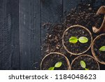 the seedlings are growing in... | Shutterstock . vector #1184048623