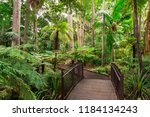 Path Through The Fern Gully Of...