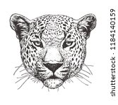 Portrait Of Leopard  Hand Drawn ...