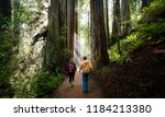 REDWOOD FOREST, CALIFORNIA/USA - DECEMBER 3, 2017: Male and Female hiker walking through giant redwood forest. - stock photo