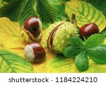 horse chestnuts on autumn... | Shutterstock . vector #1184224210