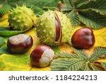 horse chestnuts on autumn... | Shutterstock . vector #1184224213