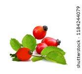 beautiful fragrant rosehip.... | Shutterstock .eps vector #1184244079