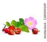 beautiful fragrant rosehip.... | Shutterstock .eps vector #1184244169