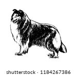Vector Hand Drawn Dog Collie...