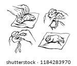vector illustration instruction ... | Shutterstock .eps vector #1184283970