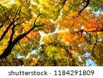 Autumn Tree Tops On Sky...
