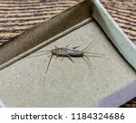 insect feeding on paper  ... | Shutterstock . vector #1184324686