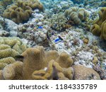 blue coral fishes in coral... | Shutterstock . vector #1184335789