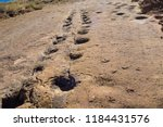 dinosaur footprint in toro toro ... | Shutterstock . vector #1184431576