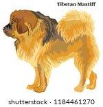 portrait of standing in profile ... | Shutterstock .eps vector #1184461270