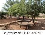 the bench is standing in the... | Shutterstock . vector #1184604763