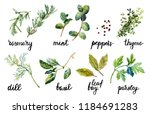 set of herbs and spice with... | Shutterstock . vector #1184691283
