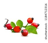 beautiful fragrant rosehip.... | Shutterstock .eps vector #1184712316