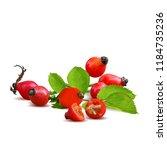beautiful fragrant rosehip.... | Shutterstock .eps vector #1184735236