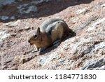 Chipmunk On Rock Chirping A...