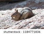 Chipmunk Eating While On Rock...