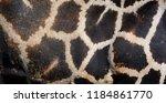the giraffe skin  giraffa... | Shutterstock . vector #1184861770