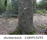 Names Carved On Tree Trunk.