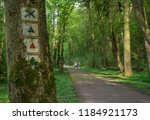 hiking trail in a forest | Shutterstock . vector #1184921173