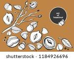 isolated vector hazelnut on a... | Shutterstock .eps vector #1184926696