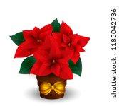 Poinsettias For Christmas...