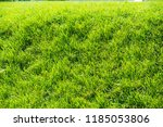 urban photography  a lawn is an ... | Shutterstock . vector #1185053806