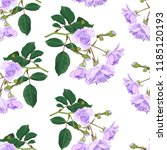 branch with lilac roses on a... | Shutterstock .eps vector #1185120193