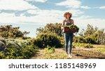 female farmer walking through...   Shutterstock . vector #1185148969