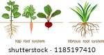 plants with different types of... | Shutterstock .eps vector #1185197410
