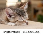 small shelter kitten napping on ... | Shutterstock . vector #1185203656