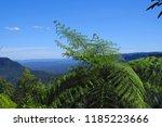 large fern overlooking blue... | Shutterstock . vector #1185223666