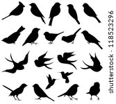 Stock vector vector collection of bird silhouettes 118523296