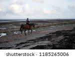 person riding a horse along a... | Shutterstock . vector #1185265006