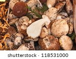Group Of Porcini Mushroom ...