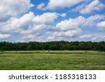 scenic summer landscape   green ... | Shutterstock . vector #1185318133