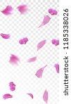 pink cherry blossom falling... | Shutterstock .eps vector #1185338026