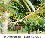garden in southen thailand   Shutterstock . vector #1185427333