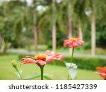 garden in southen thailand   Shutterstock . vector #1185427339
