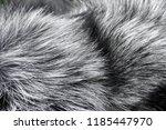 Fur Texture Of Fox  Silver...